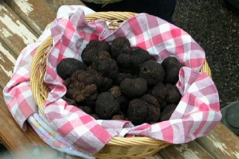truffes1.jpg